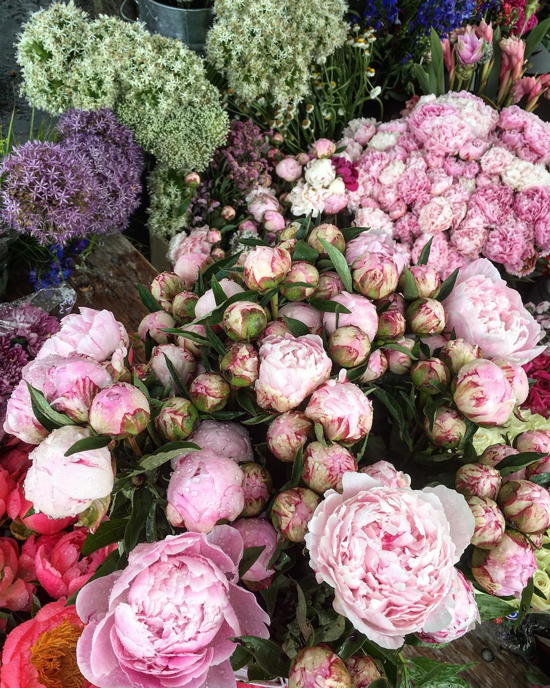 JUST BECAUSE peonies thebesssst hisummer howareya thingaboutlife