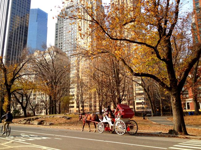Central Park_Fall